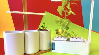 Top 5: Die besten smarten Indoor-Gärten ab 40 Euro