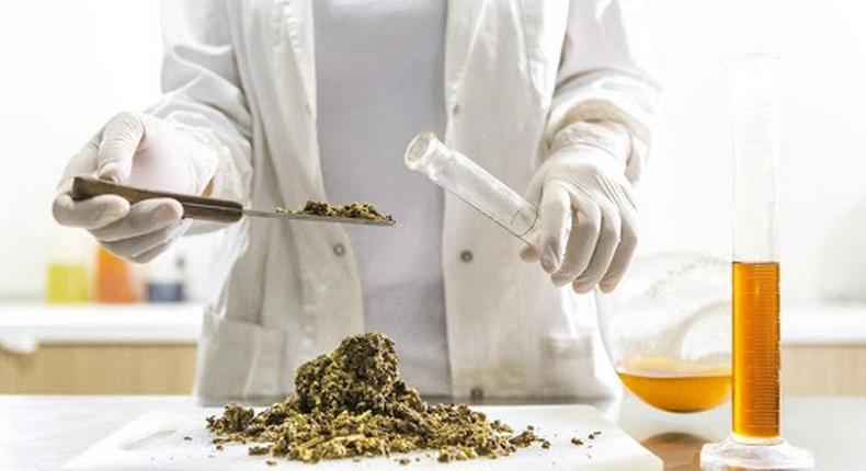 CBD Tinctures: Extraction methods that work