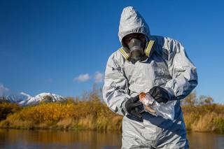 Martwe foki i ośmiornice. Ekolodzy zaniepokojeni skażeniem na Kamczatce, przyczyny nie są znane