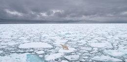 """Naukowcy w trwodze. """"Potwór"""" z Arktyki zagraża całemu światu!"""