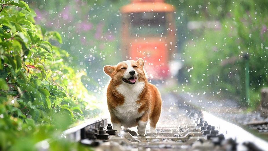 Psy, które mają mało ruchu mogą mieć duża nadwagę - huoadg5888/pixabay.com