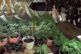 Labaratorija droge u podrumu kuće