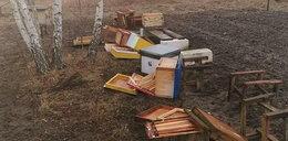 Bestialstwo. Ktoś wymordował pół miliona pszczół