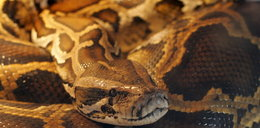 Trup leżał wśród 46 węży
