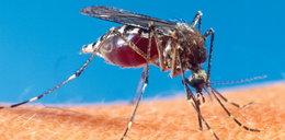 Zagraża nam groźna choroba od komarów!