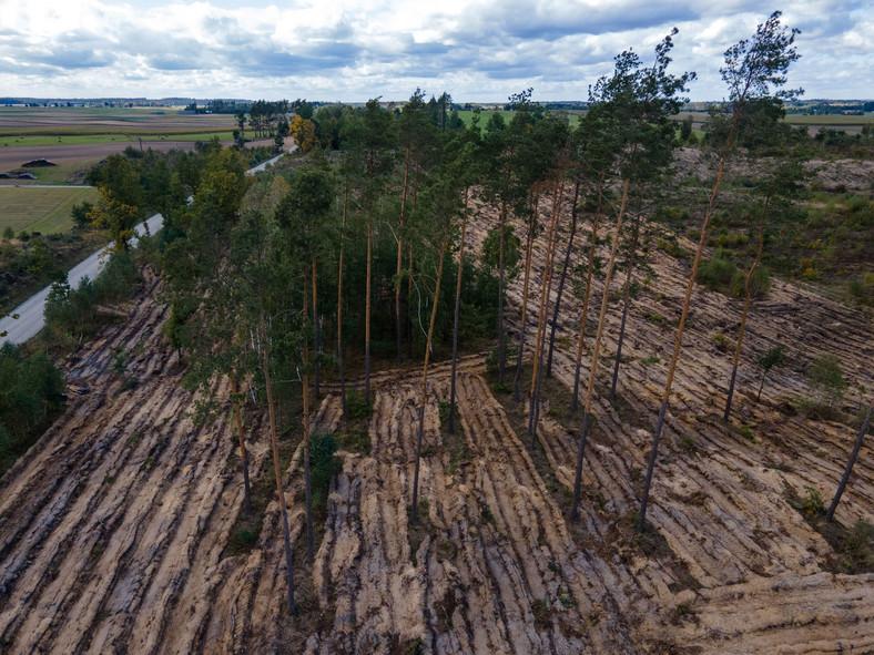 Volkswagen rozpoczyna sadzenie ośmiu hektarów lasów w Polsce
