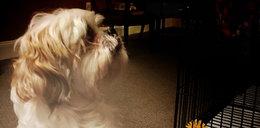 To przerażające i nieludzkie! Co zrobiono z psem po śmierci jego właścicielki?