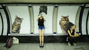 Koty zamiast reklam na stacji londyńskiego metra