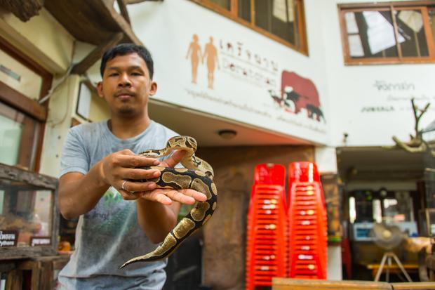 """Opiekun z fundacji """"Puean Deratchan"""" z wężem, Bangkok"""