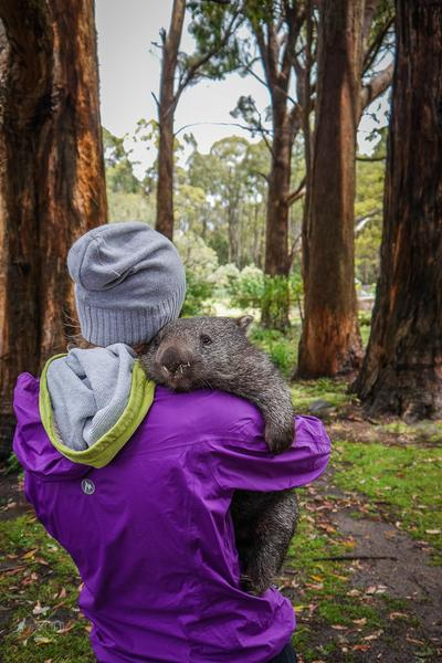 Julia przytula wombata w parku na Tasmanii
