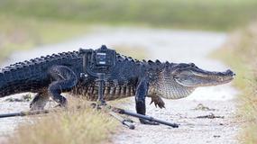 """Fotograf wybrał się na """"polowanie"""" z aparatem. Co zobaczył?"""