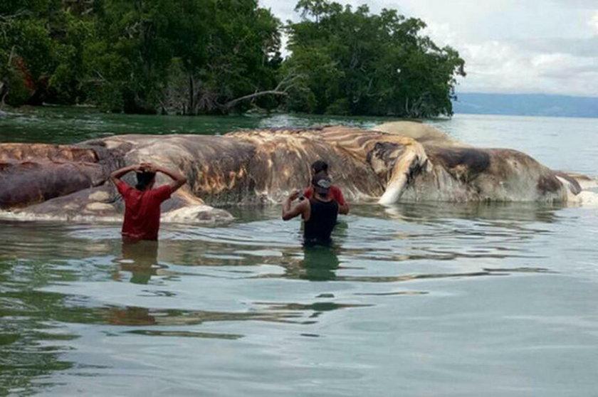 Morze wyrzuciło na brzeg ogromnego potwora