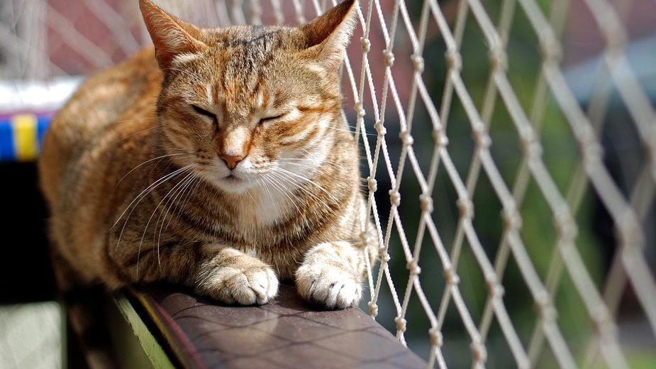Siatka zabezpieczająca ogranicza ryzyko upadku kota z dużej wysokości