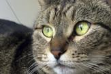 mačka emigrirala02
