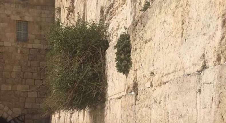 Raila at the Wailing Wall
