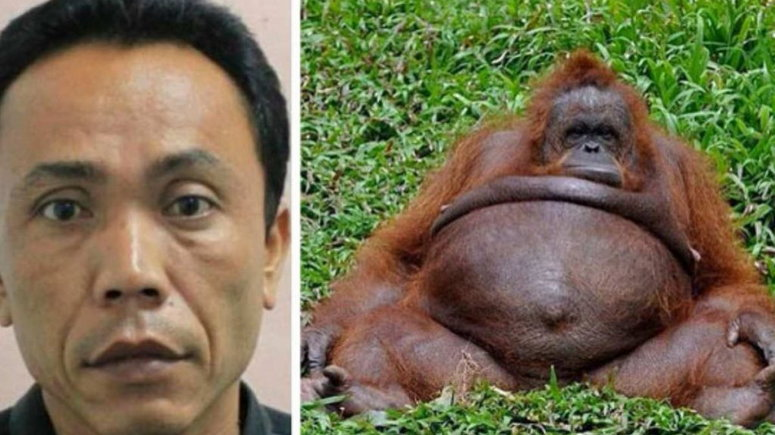 Zoo keeper impregnate's female monkey