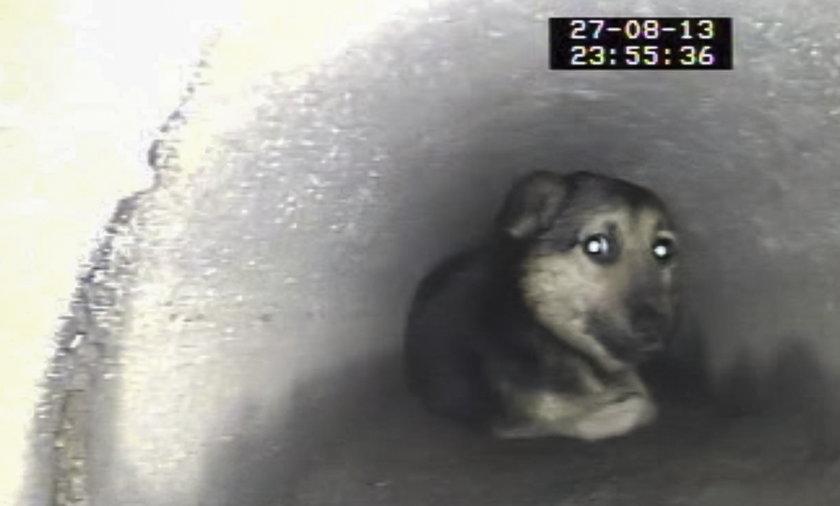 Pies uratowany z kanalu deszczowego.