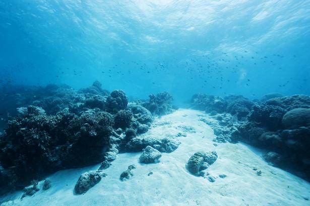 Plastik unosi się nad oceanami. Może przeniknąć do układów pokarmowych zwierząt