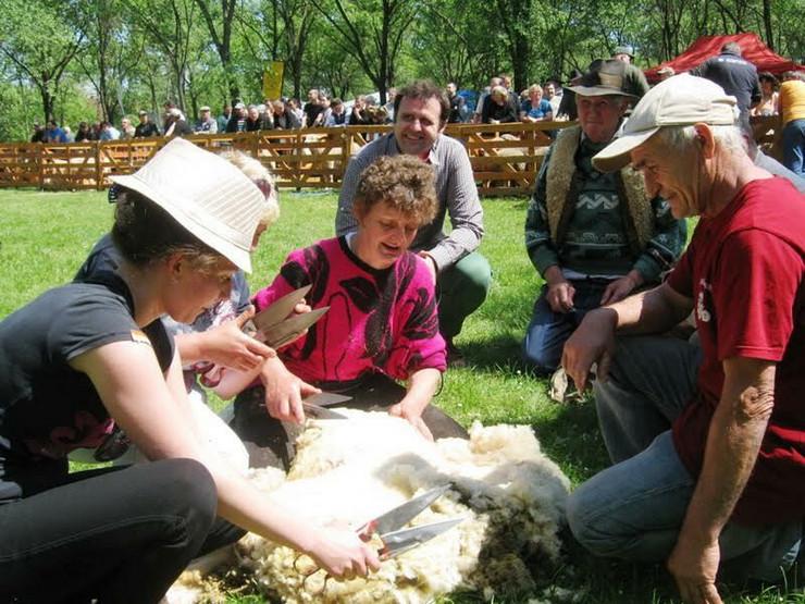 Senta Festival ovcara - Angela Bozo