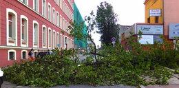 Wichura w Łódzkiem: Drzewa łamały się na auta i ludzi!