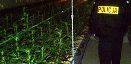 Polscy narkomani palą zmutowaną trawę!