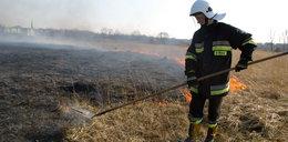 Uratują łąki po pożarze
