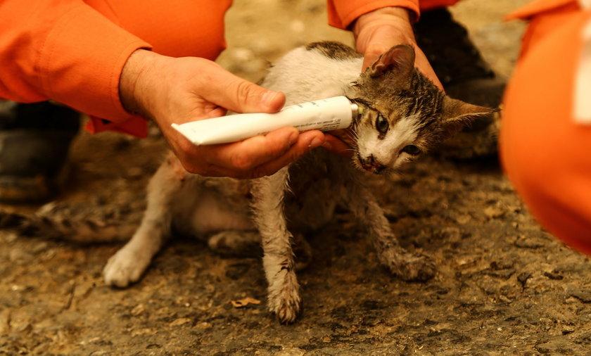 Kot uratowany przez strażaków z pożaru.