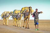 Put hrane - kamile