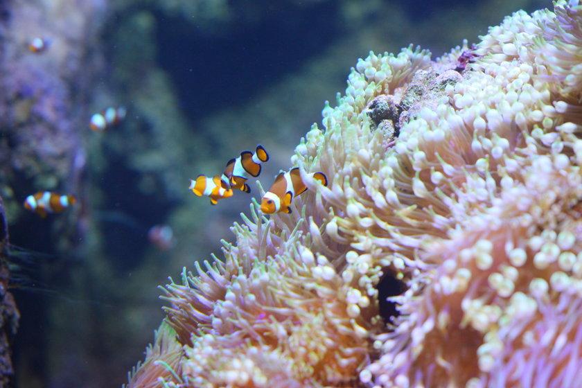 Nowe akwarium w stołecznym zoo