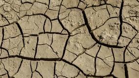Rząd Litwy ogłosił w kraju stan klęski żywiołowej z powodu suszy