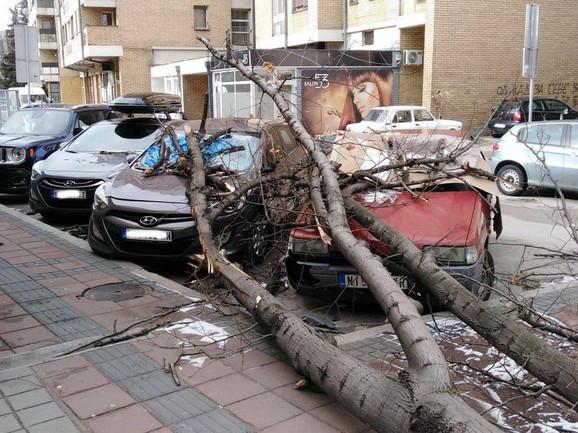 Stablo koje se srušilo kod Uslužnog centra