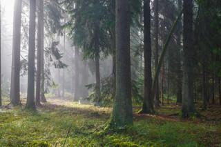 Właściciele lasów muszą opłacić podatek. Zbliża się termin pierwszej raty