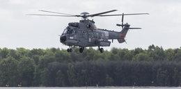 Wojna o caracale! Francuzi grożą polskiemu rządowi