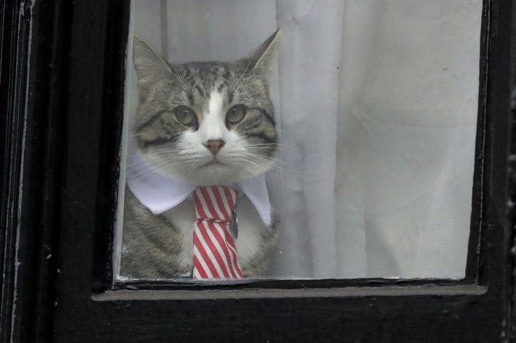 Asanžova mačka AP