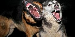 Psy zaatakowały dzieci. Dziewięciolatka osłoniła braciszka