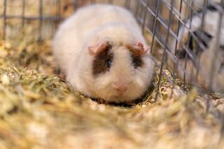 Obowiązek humanitarnego traktowania ma dotyczyć hodowli zwierząt przeznaczonych do wykorzystania w celach naukowych