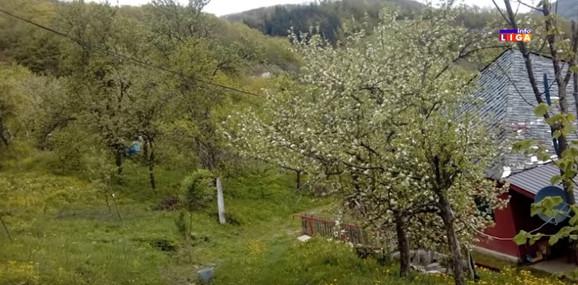 Košnice se nalaze u neposrednoj blizini kuća
