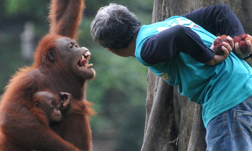 Małpa rozmawia z człowiekiem