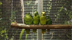 Papugarnia Carmen w Łodzi