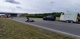 Tragedia na A2. Koń wybiegł na jezdnię, musieli go uśpić