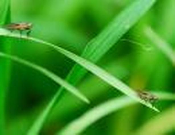 Projekt o nasiennictwie nie reguluje GMO