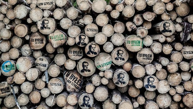 Trybunał Sprawiedliwości UE wydał zakaz wycinki drzew w całej Puszczy Białowieskiej