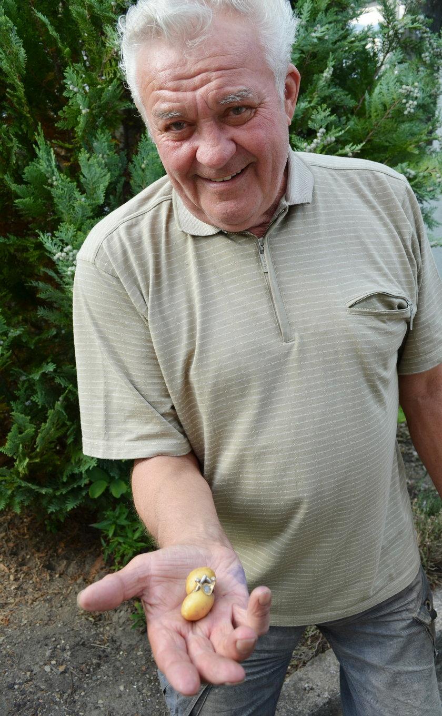Niemiec pokazuje zimniak z pierścionkiem
