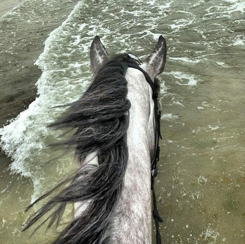 Koń Kate Rozz