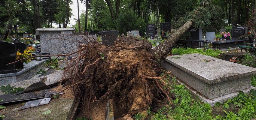 Wiatr rwał drzewa z korzeniami