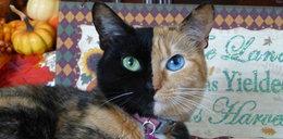 Oto kot o dwóch twarzach!