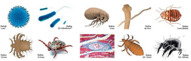 negatív hpv és dysplasia parazita elemzés