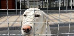 Kto chce zaszkodzić schronisku dla zwierząt w Gdańsku? Pracownicy są w szoku