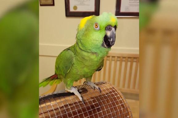 Svi se oduševe kad papagaj PROGOVORI, ali ovaj nas je PRESTRAVIO (VIDEO)