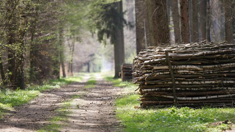 Polskie lasy uratują polskie drogi